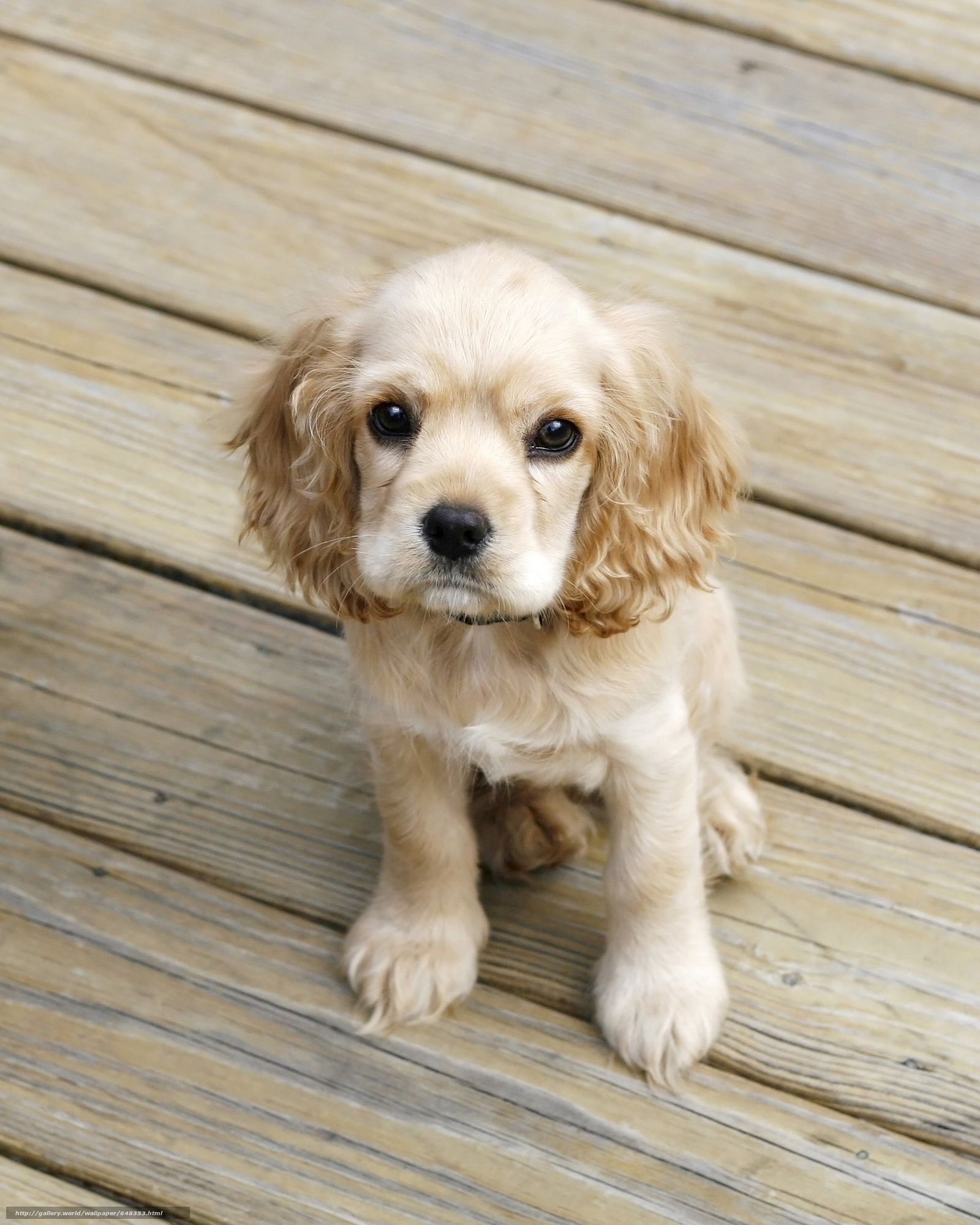 Baixar Wallpaper cão,  Cão,  animais,  cachorro Papis de parede grtis na resoluo 3532x4412 — quadro №648353