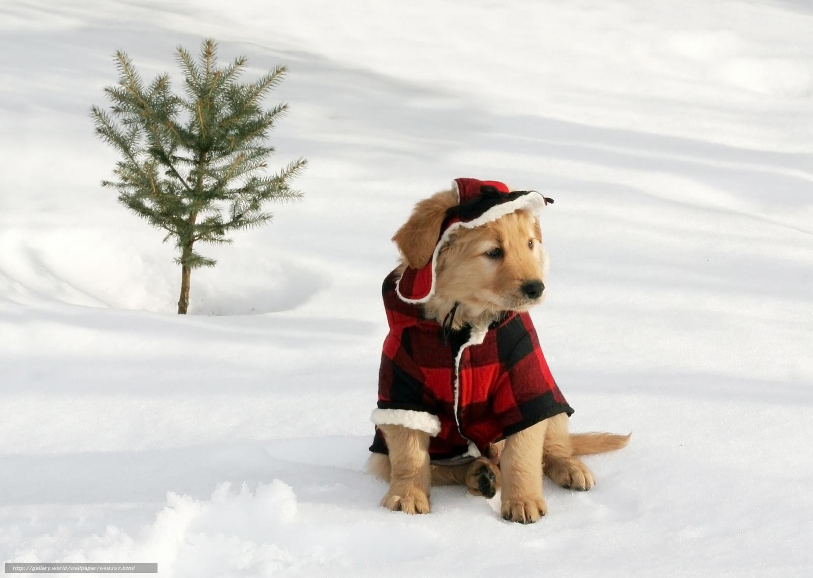 Скачать обои собака,  собаки,  животные,  щенок бесплатно для рабочего стола в разрешении 4220x3000 — картинка №648357