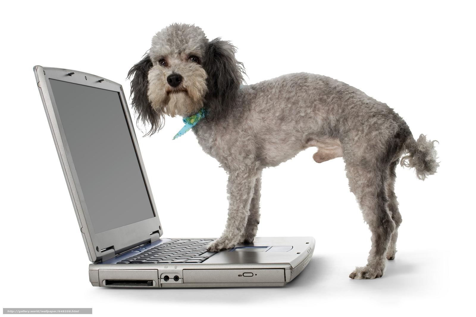 scaricare gli sfondi cane,  Cane,  pecorina,  animali Sfondi gratis per la risoluzione del desktop 6000x4000 — immagine №648358