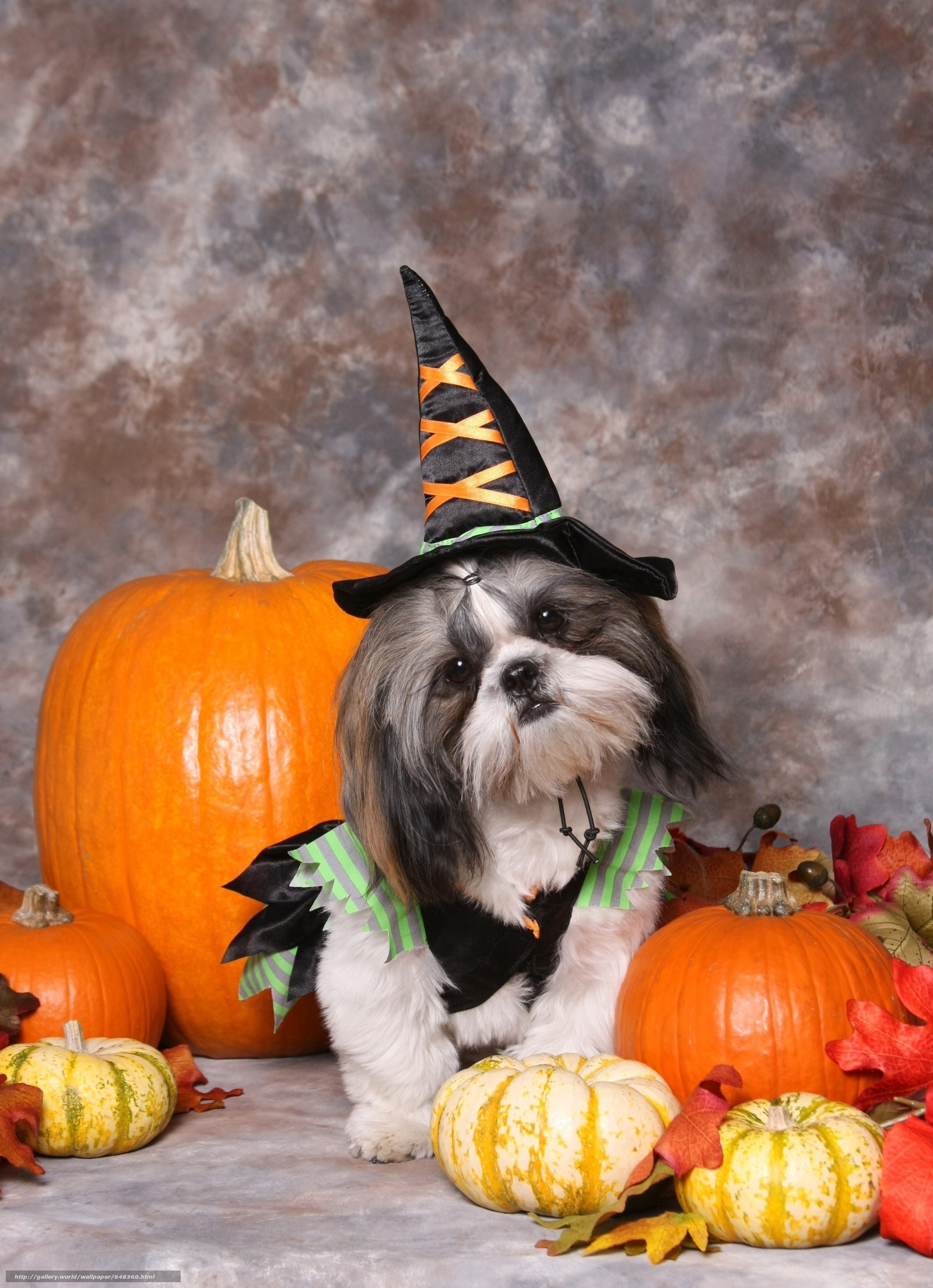 Скачать обои собака,  собаки,  животные,  щенок бесплатно для рабочего стола в разрешении 4348x6000 — картинка №648360