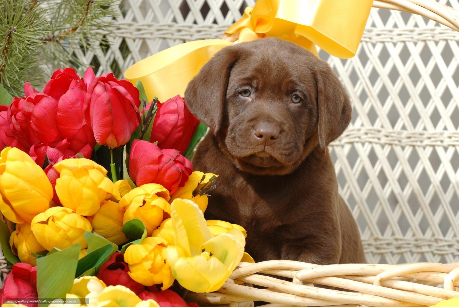 Скачать обои собака,  собаки,  животные,  щенок бесплатно для рабочего стола в разрешении 7744x5184 — картинка №648379