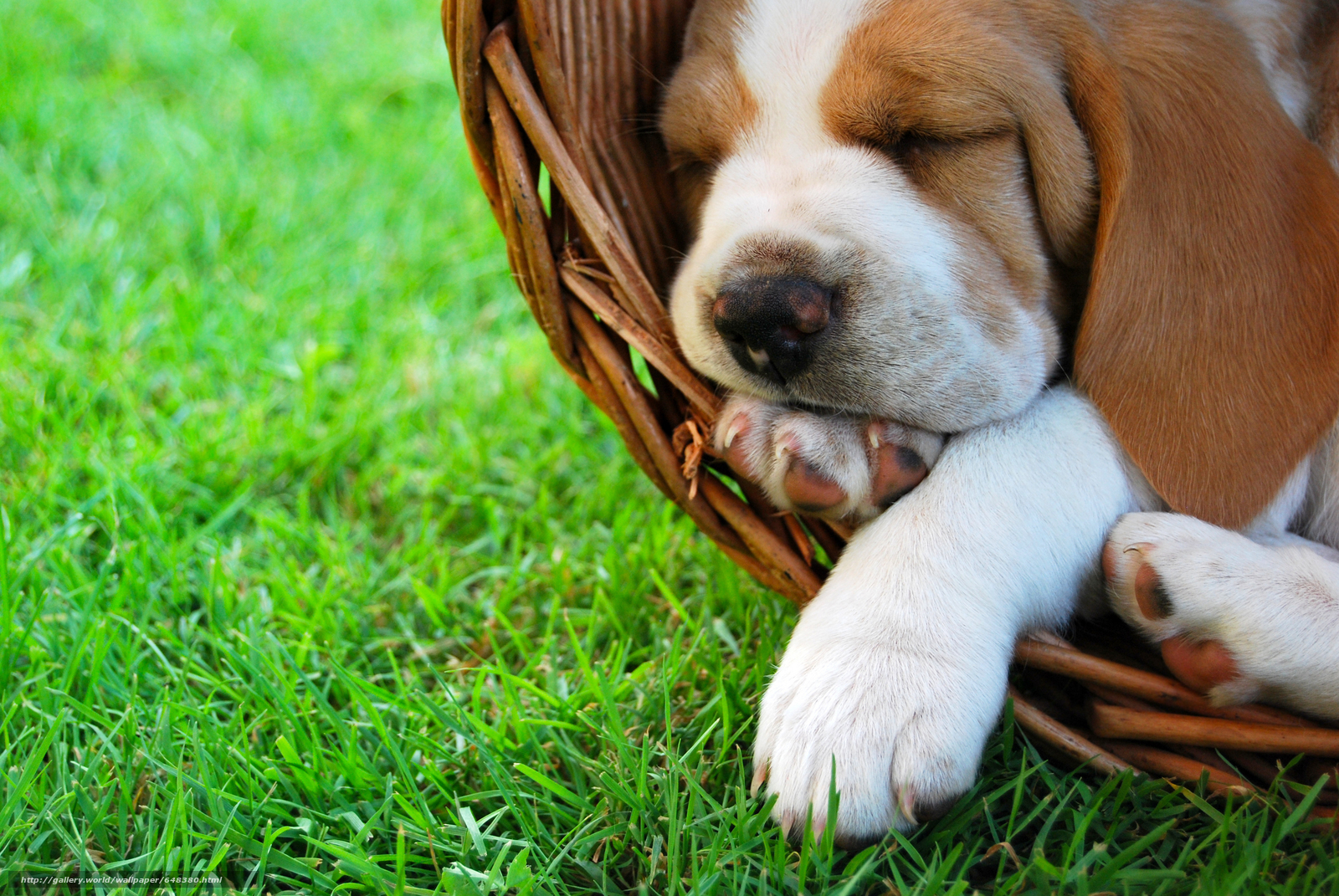Download wallpaper dog,  Dog,  animals,  puppy free desktop wallpaper in the resolution 6000x4016 — picture №648380