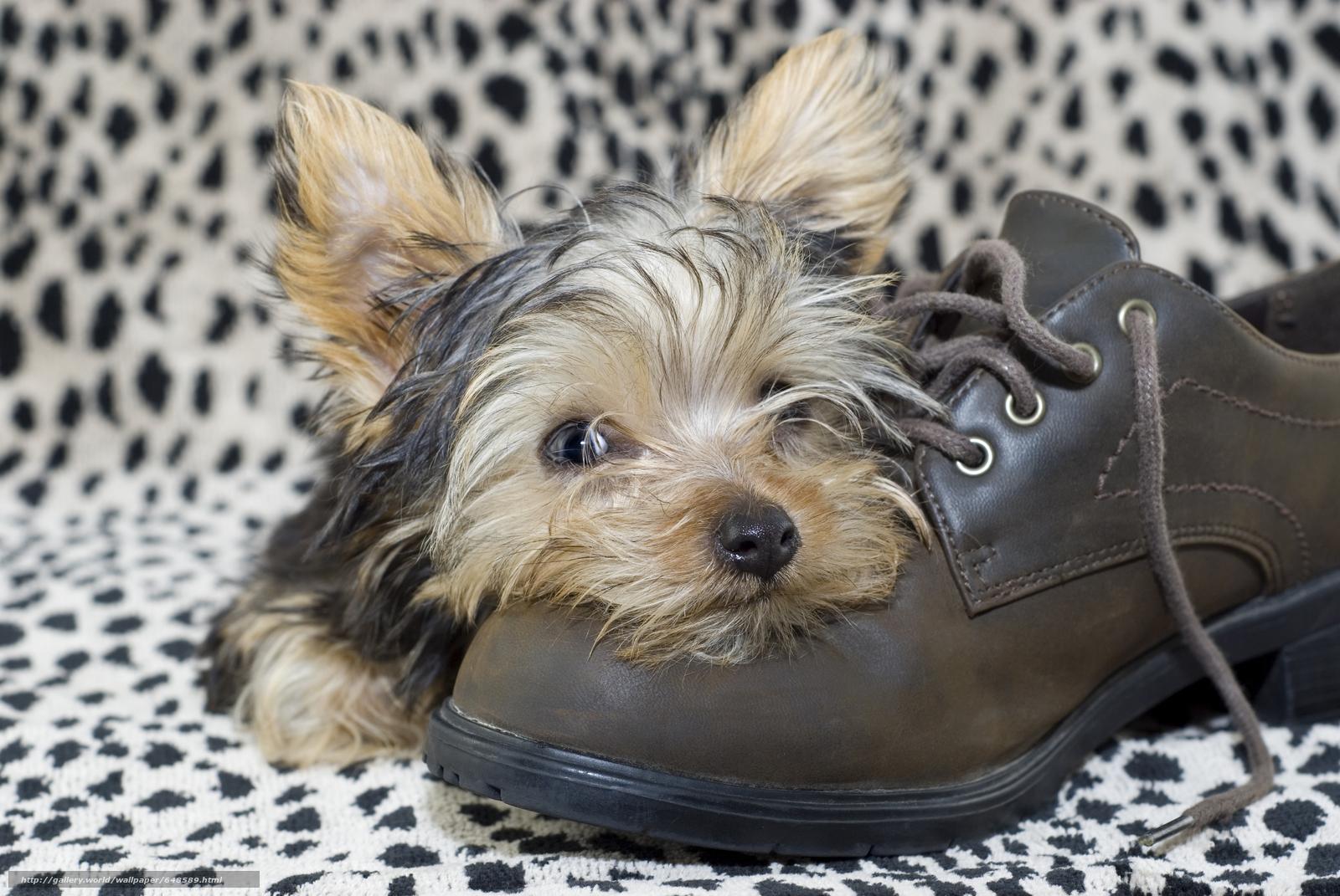 Скачать обои собаки,  собака,  щенок,  щенки бесплатно для рабочего стола в разрешении 7744x5184 — картинка №648589