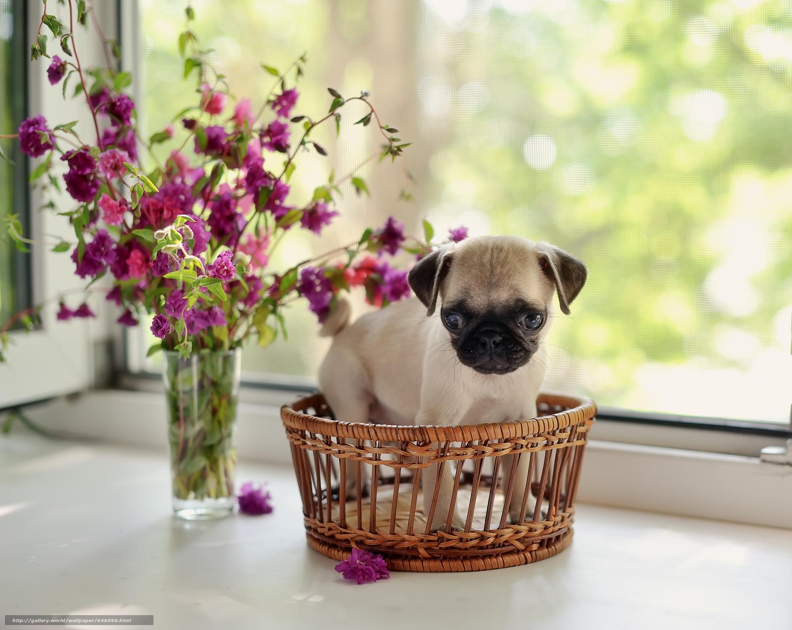 scaricare gli sfondi Cane,  cane,  cucciolo,  Cuccioli Sfondi gratis per la risoluzione del desktop 7120x5664 — immagine №648590