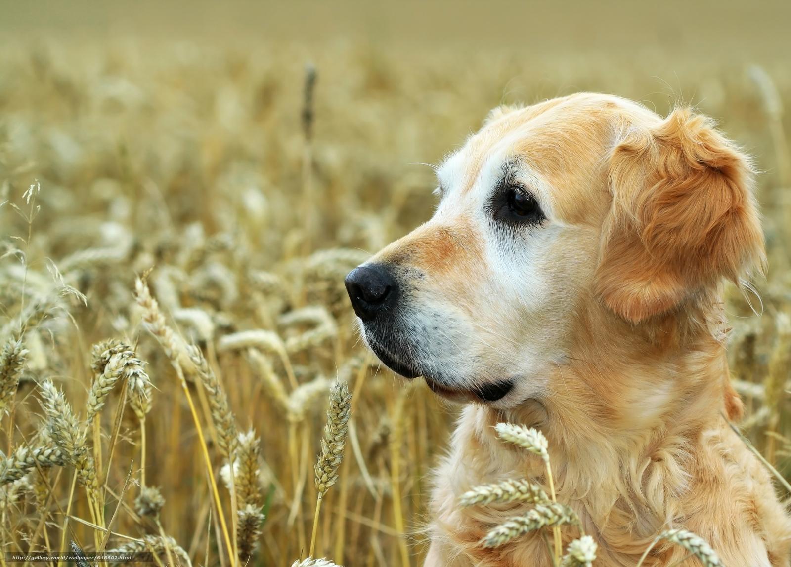 Скачать обои собаки,  собака,  животные,  пёс бесплатно для рабочего стола в разрешении 7226x5184 — картинка №648602