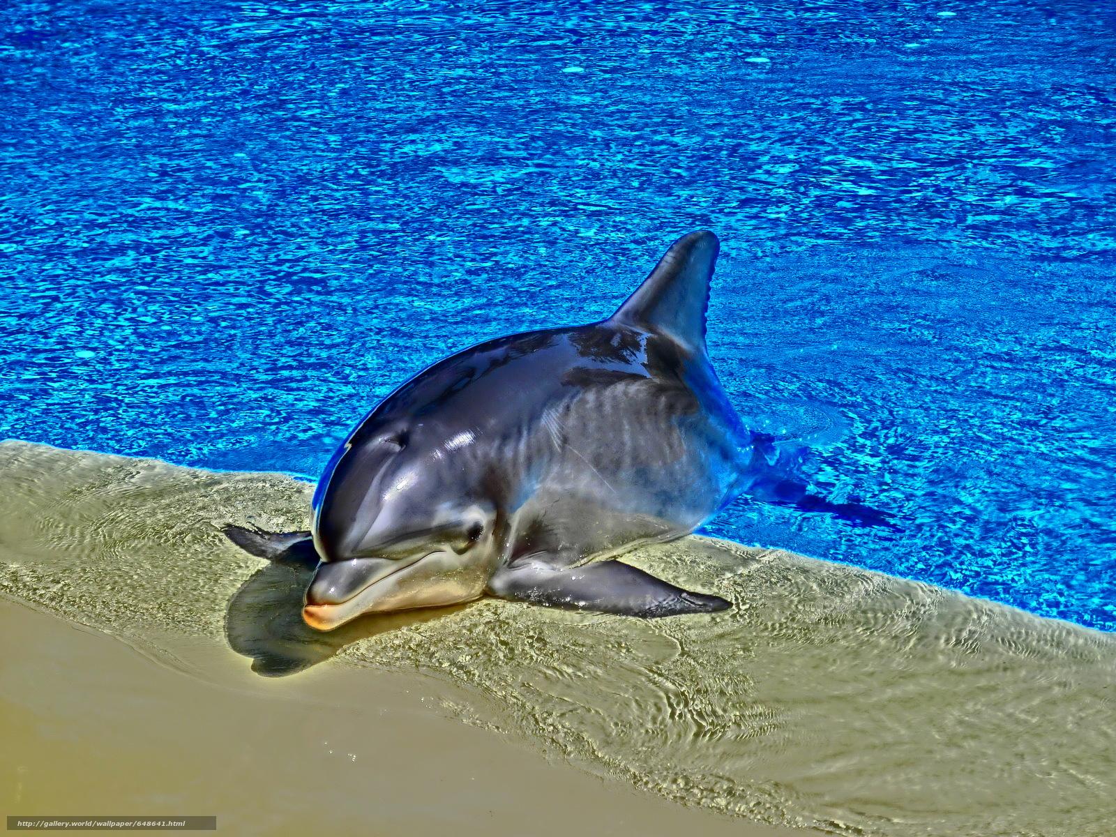 Tlcharger Fond d'ecran delphinarium,  piscine,  dauphin Fonds d'ecran gratuits pour votre rsolution du bureau 3648x2736 — image №648641