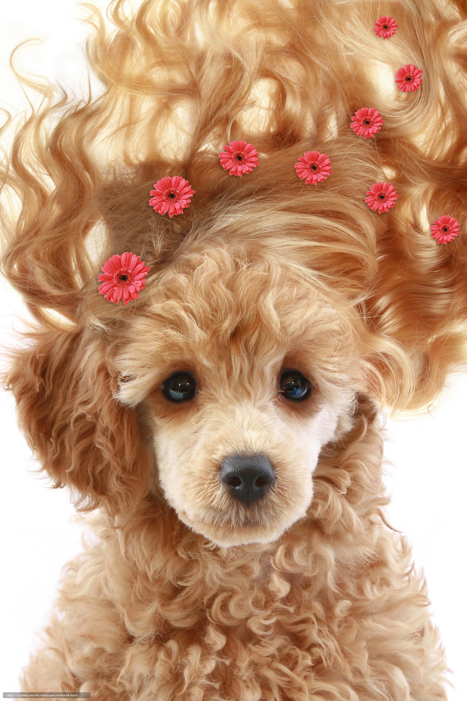 Скачать обои собака,  собаки,  животные,  щенок бесплатно для рабочего стола в разрешении 4672x7008 — картинка №648648