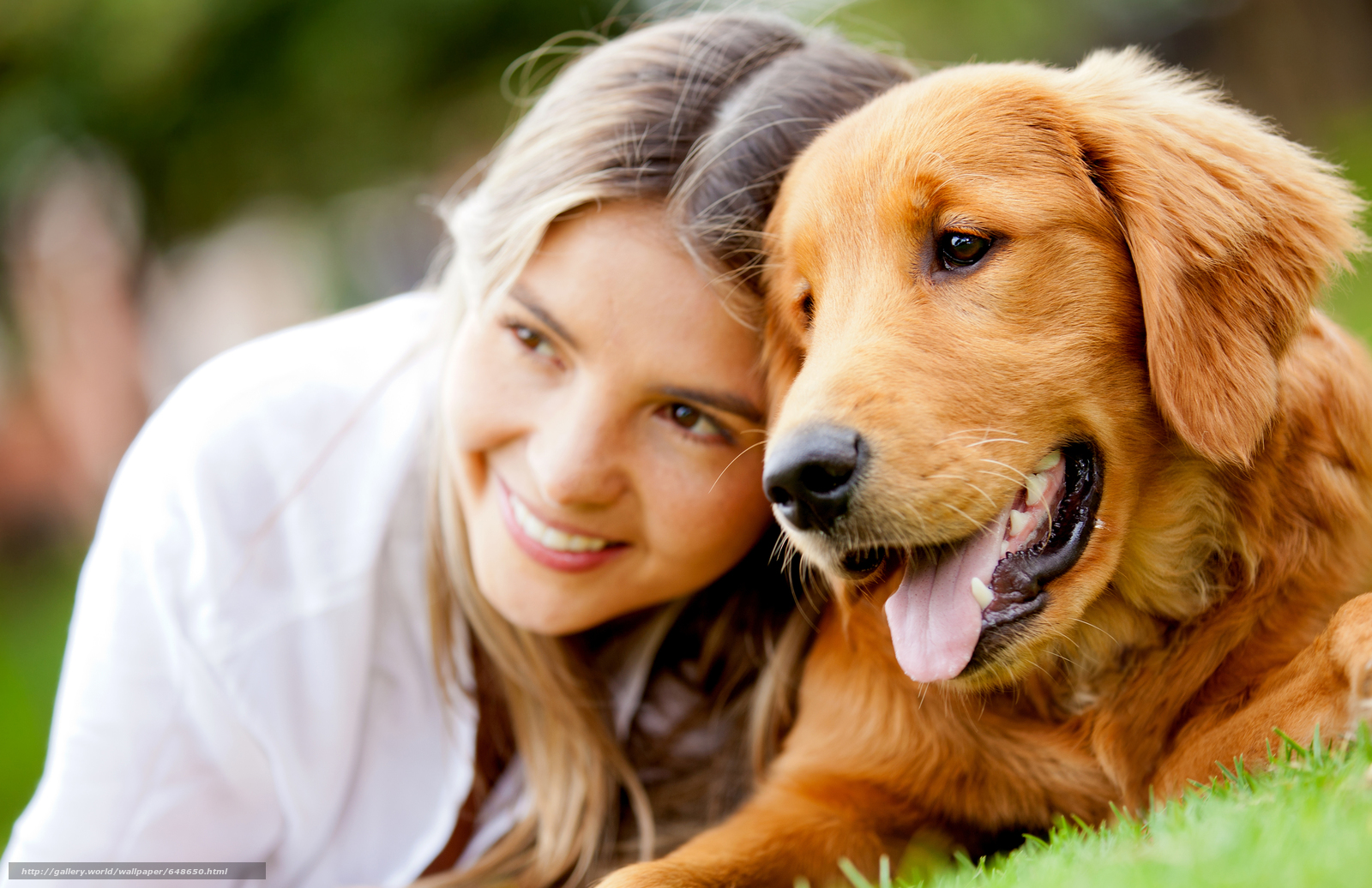 Скачать обои собака,  собаки,  животные,  щенок бесплатно для рабочего стола в разрешении 7572x4902 — картинка №648650