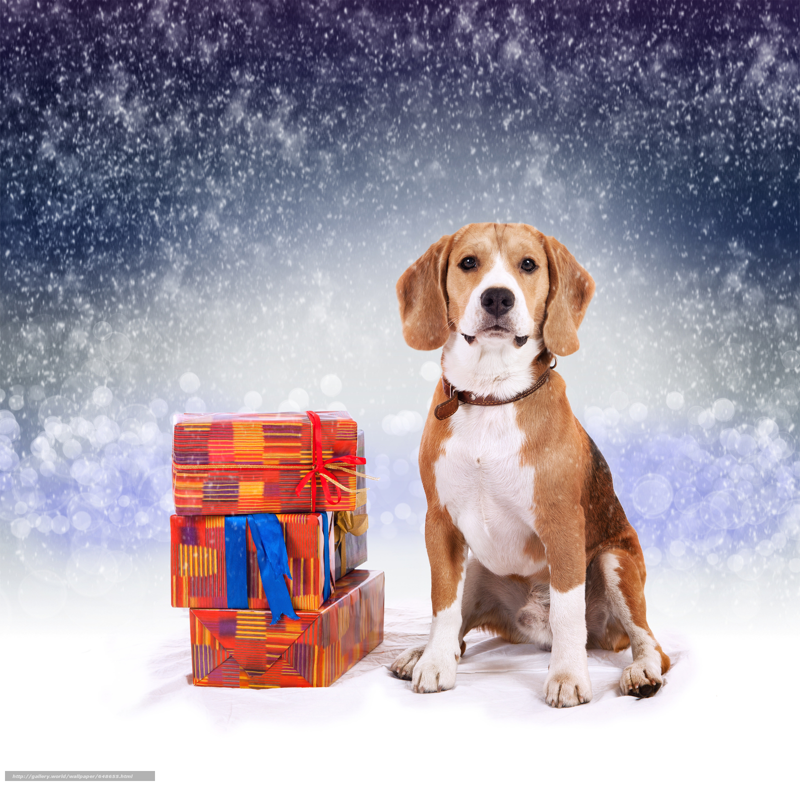 Download wallpaper dog,  Dog,  animals,  puppy free desktop wallpaper in the resolution 5000x4912 — picture №648655