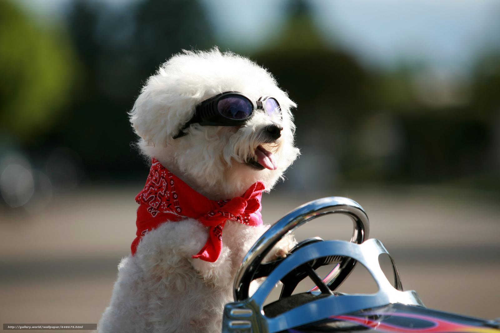 Скачать обои собака,  собаки,  животные,  щенок бесплатно для рабочего стола в разрешении 8736x5824 — картинка №648675
