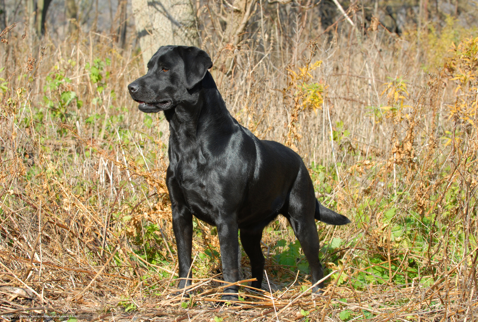 Скачать обои собака,  собаки,  животные,  пёс бесплатно для рабочего стола в разрешении 7414x5002 — картинка №648683