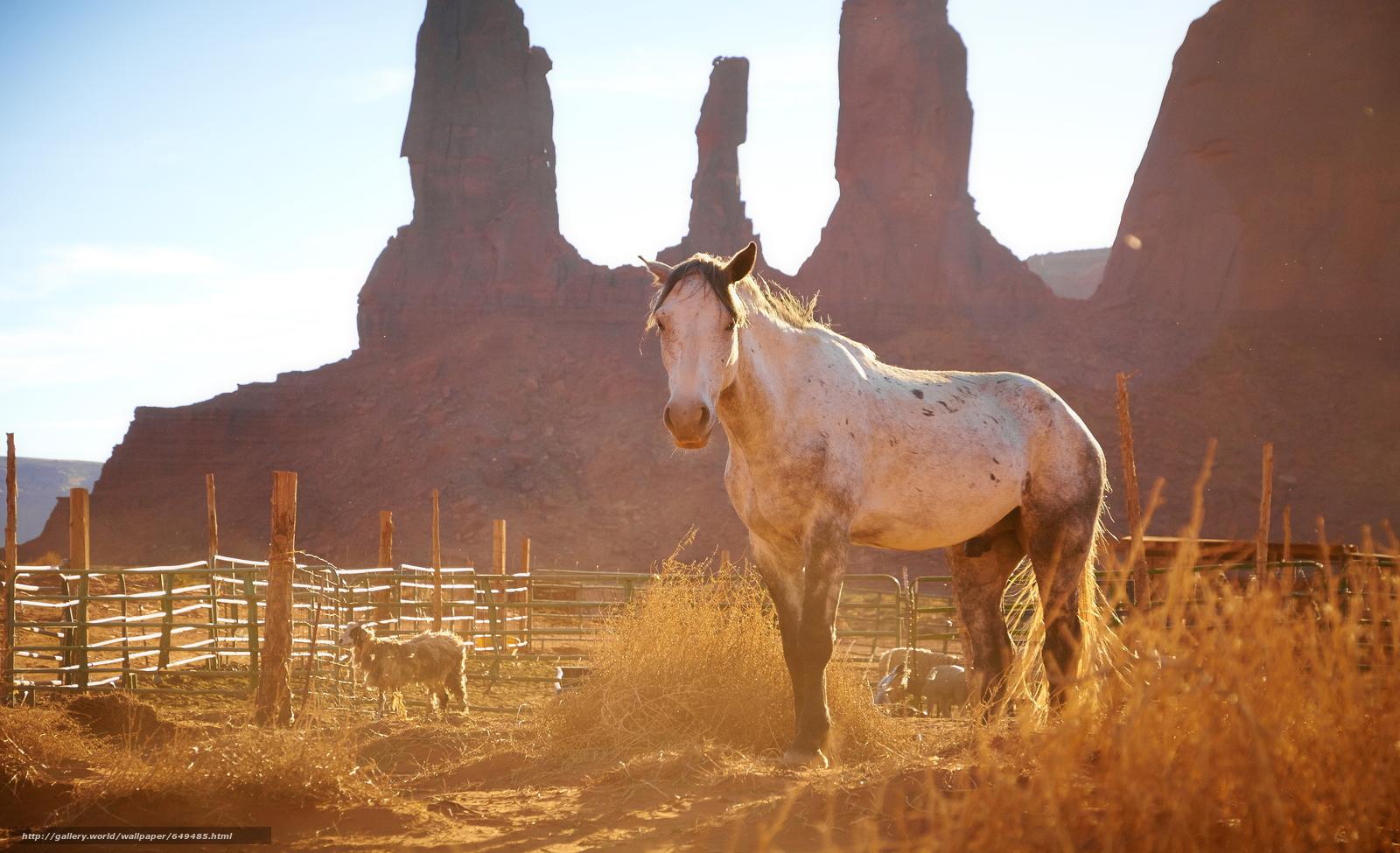 Скачать обои лошадь,  конь,  лошади,  кони бесплатно для рабочего стола в разрешении 3840x2341 — картинка №649485