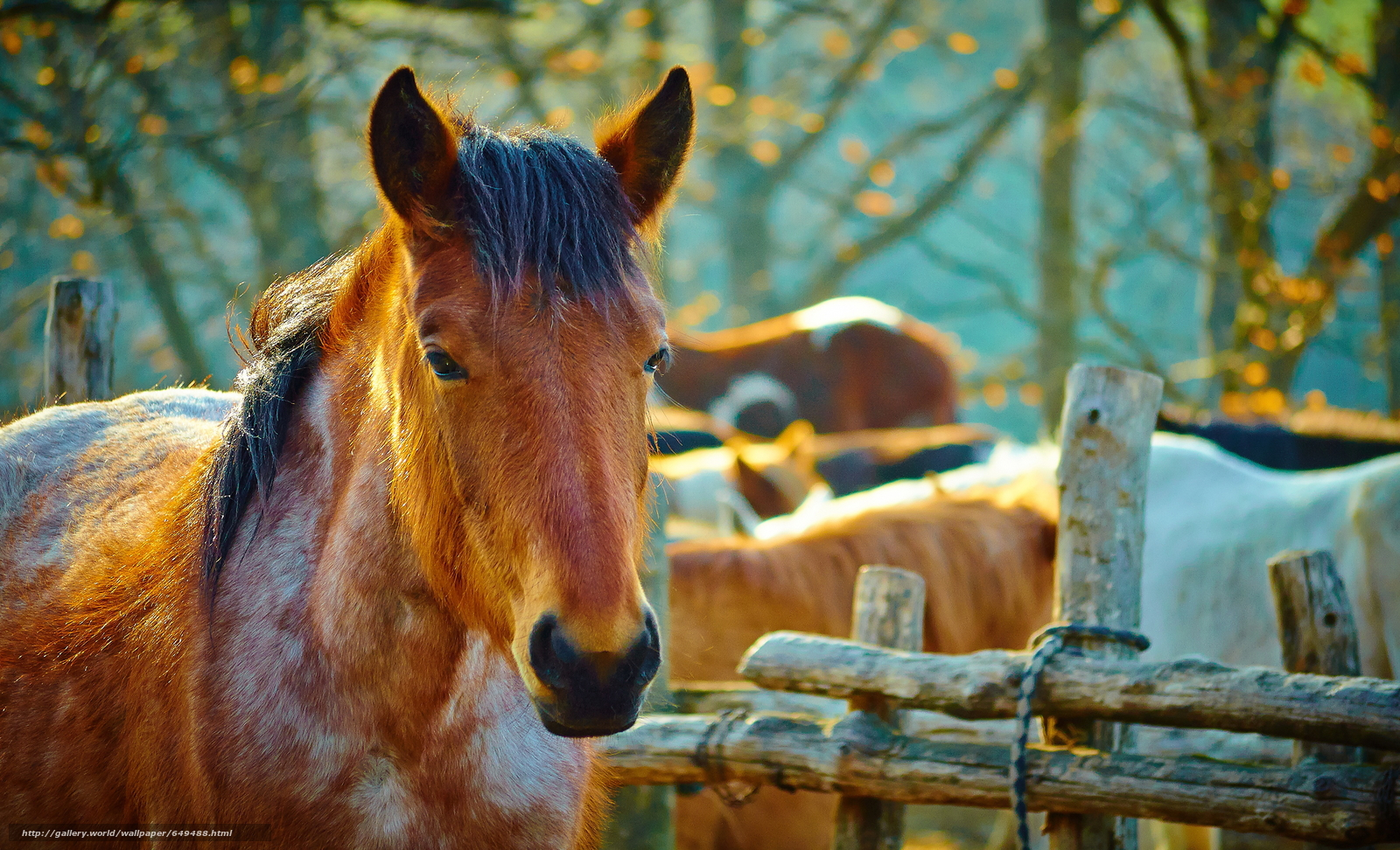 Download wallpaper horse,  horse,  horse,  Horses free desktop wallpaper in the resolution 3840x2332 — picture №649488