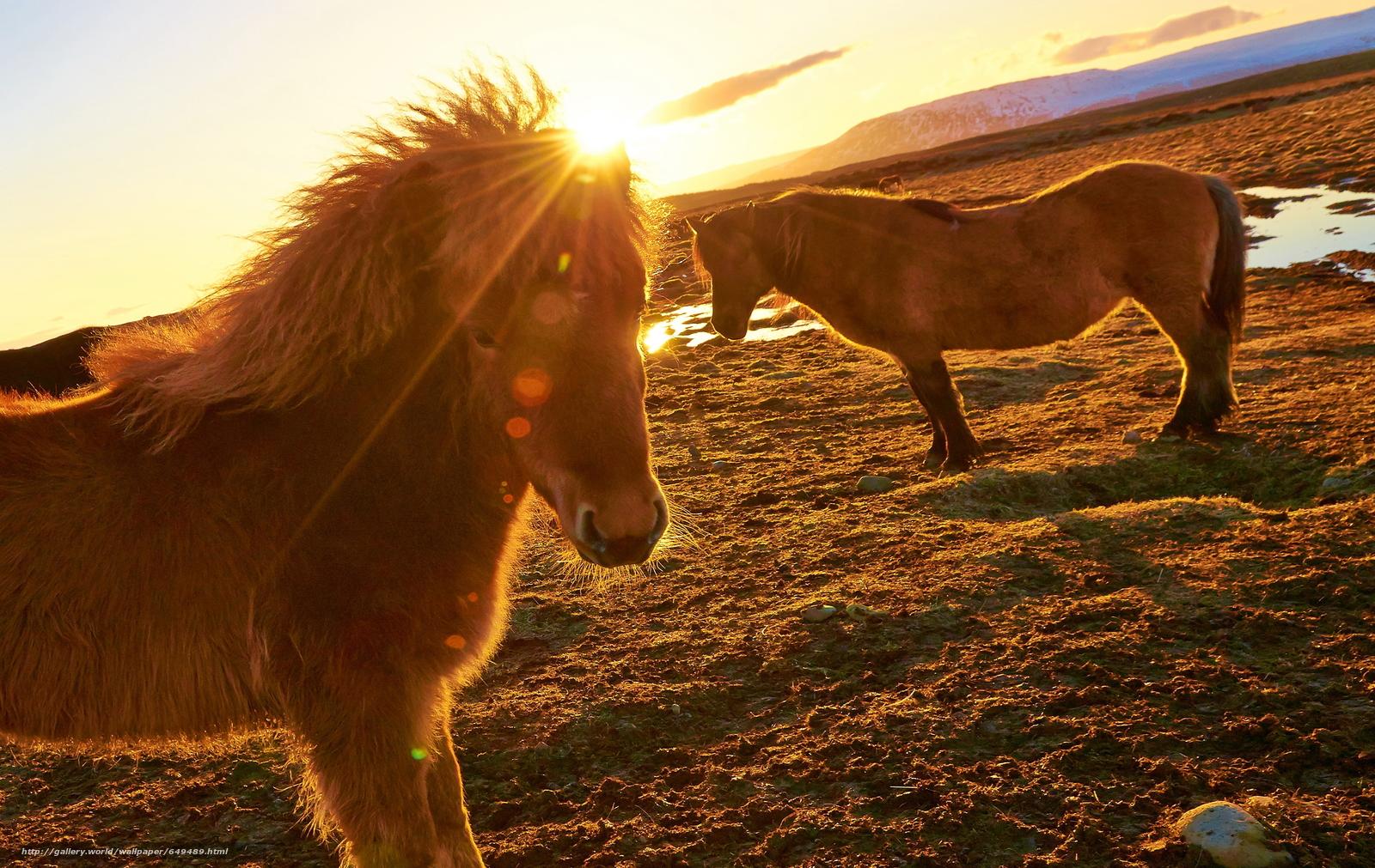 Скачать обои лошадь,  конь,  лошади,  кони бесплатно для рабочего стола в разрешении 3374x2133 — картинка №649489