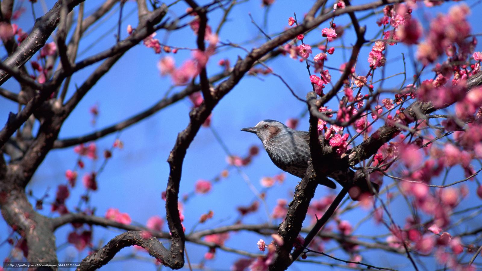 Descargar gratis pájaro,  pájaros,  PRIMAVERA,  floración Fondos de escritorio en la resolucin 2880x1620 — imagen №649505