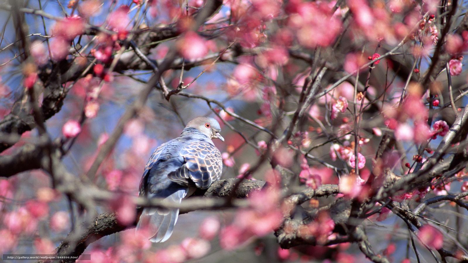Descargar gratis pájaro,  pájaros,  PRIMAVERA,  floración Fondos de escritorio en la resolucin 2880x1620 — imagen №649506
