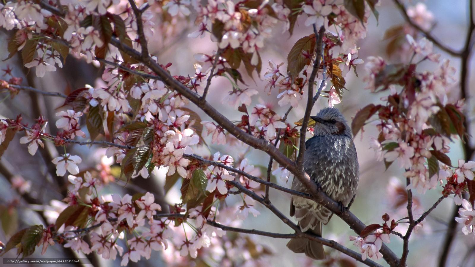 Download wallpaper bird,  birds,  SPRING,  flowering free desktop wallpaper in the resolution 2880x1620 — picture №649507