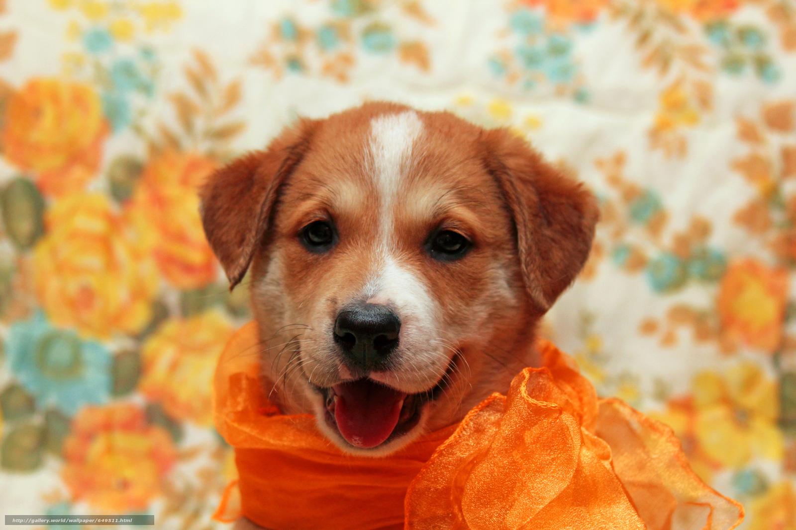 壁紙をダウンロード 犬,  犬,  子犬,  子犬 デスクトップの解像度のための無料壁紙 5184x3456 — 絵 №649511