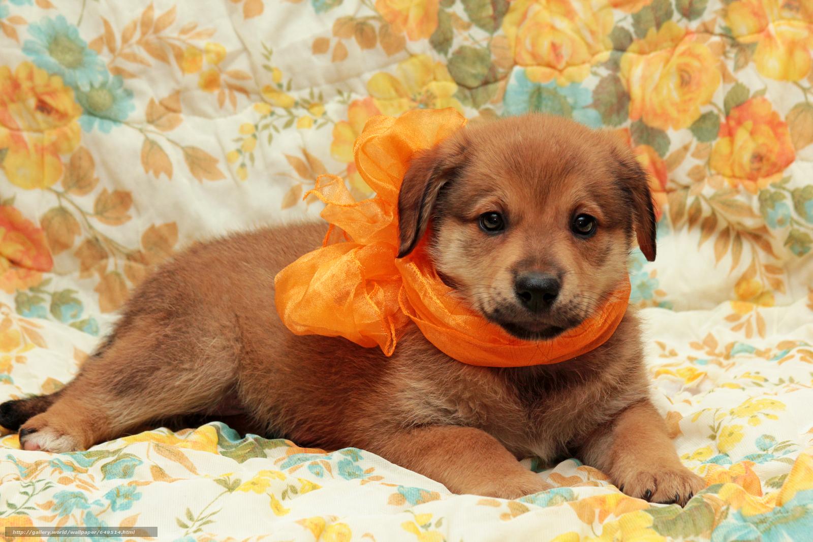 壁紙をダウンロード 犬,  犬,  子犬,  子犬 デスクトップの解像度のための無料壁紙 5184x3456 — 絵 №649514