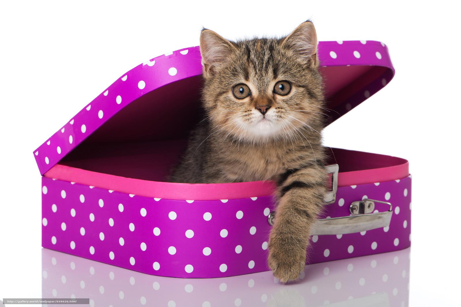 Скачать обои кошка,  котёнок,  взгляд,  чемодан бесплатно для рабочего стола в разрешении 6280x4191 — картинка №649636