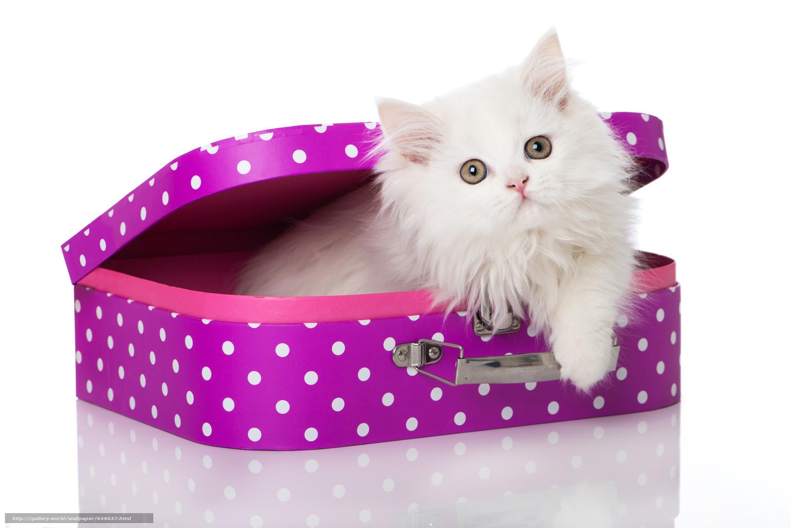Скачать обои кошка,  котёнок,  белый,  пушистый бесплатно для рабочего стола в разрешении 6695x4468 — картинка №649637