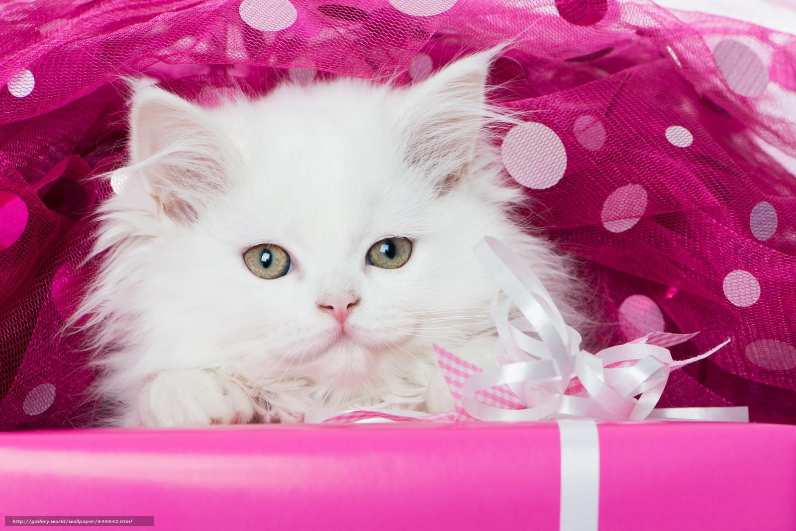scaricare gli sfondi gattino,  bianco,  museruola,  visualizzare Sfondi gratis per la risoluzione del desktop 6991x4666 — immagine №649642
