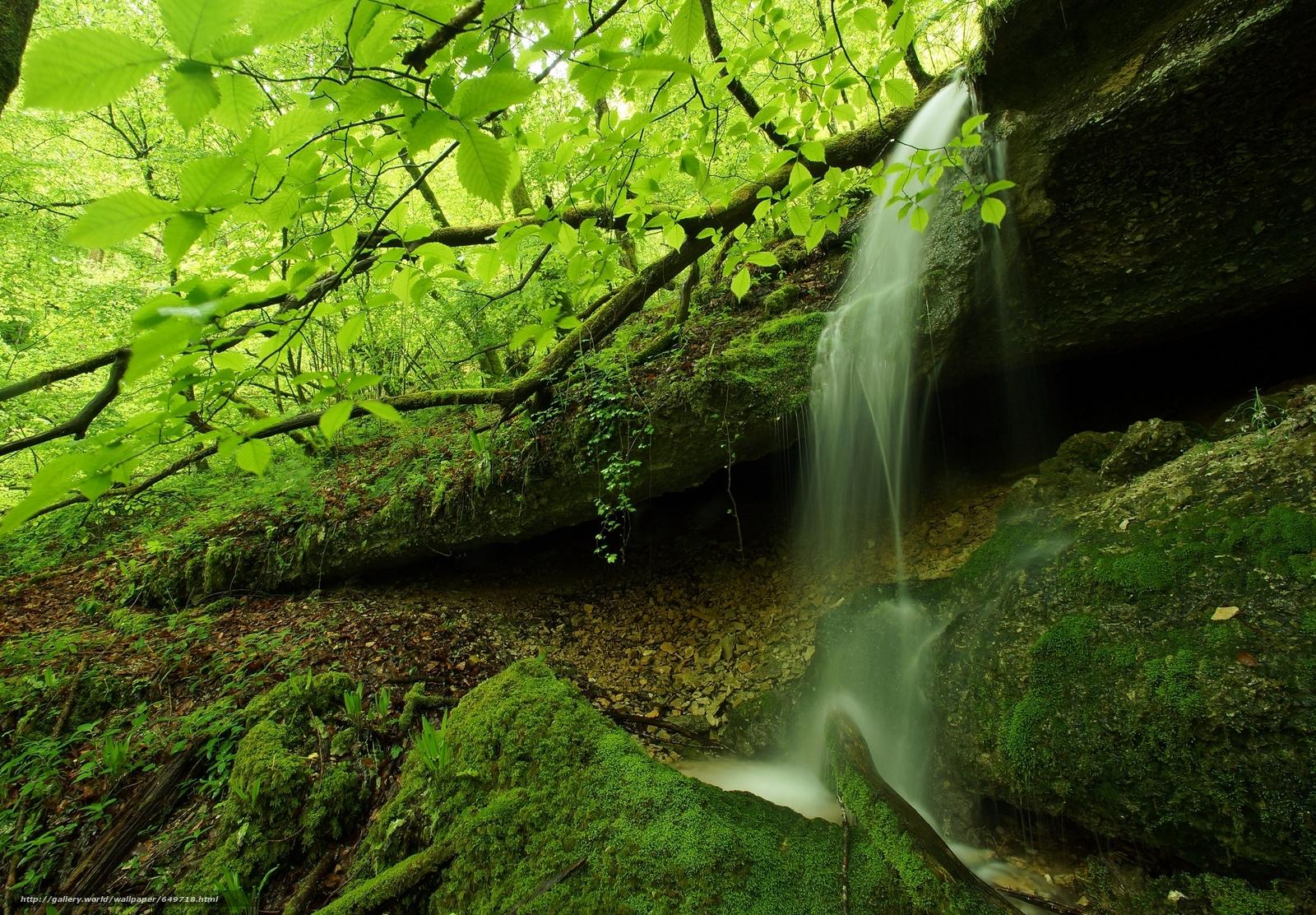 scaricare gli sfondi foresta,  alberi,  fiume,  cascata Sfondi gratis per la risoluzione del desktop 2048x1423 — immagine №649718