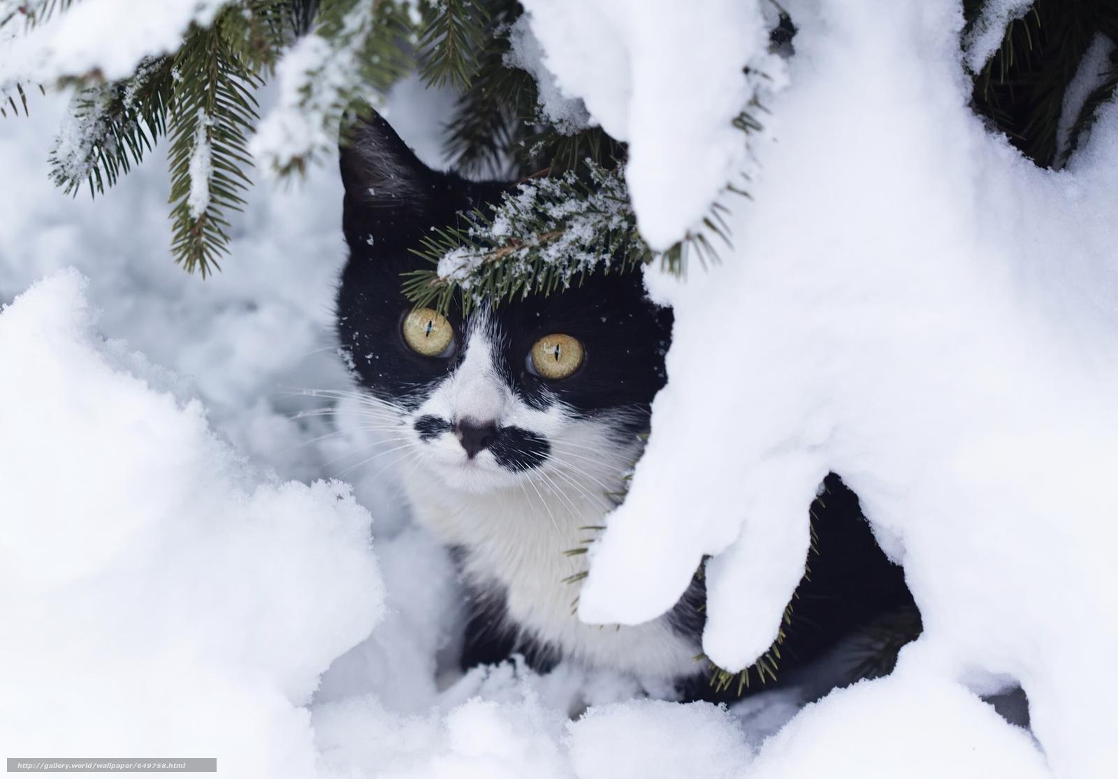 Скачать обои кошка,  кот,  зима,  снег бесплатно для рабочего стола в разрешении 2048x1428 — картинка №649758