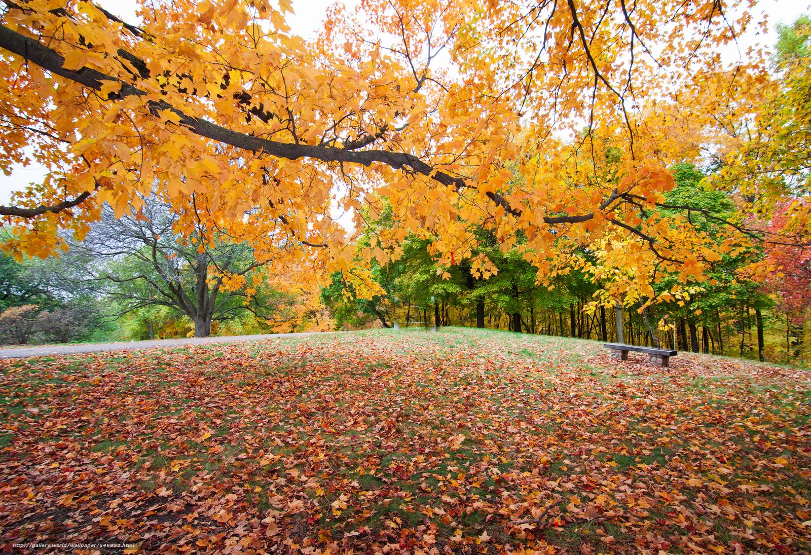 Скачать обои осень,  парк,  деревья,  пейзаж бесплатно для рабочего стола в разрешении 2048x1402 — картинка №649852