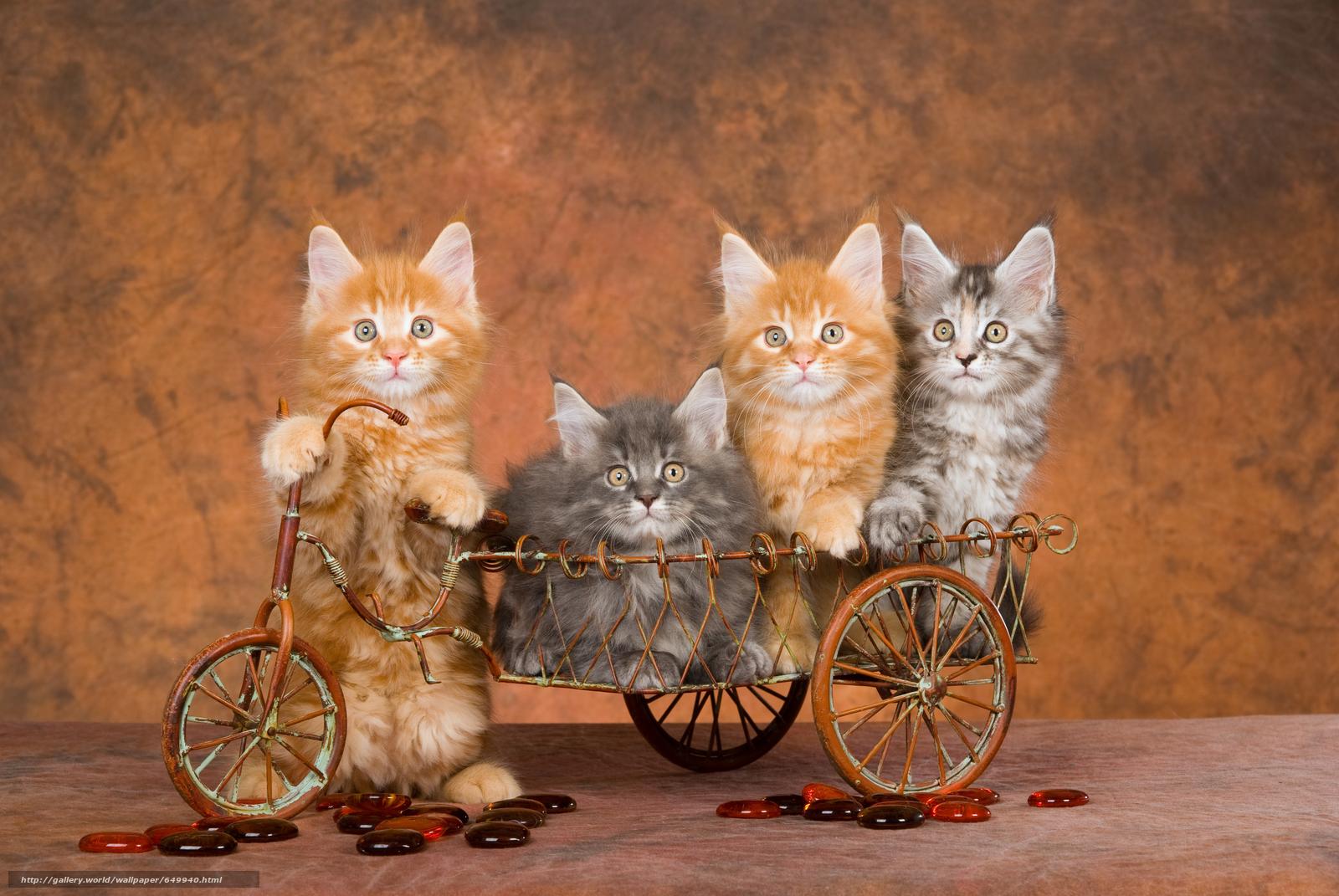 Descargar gratis Gatitos,  animales,  ver Fondos de escritorio en la resolucin 7744x5184 — imagen №649940