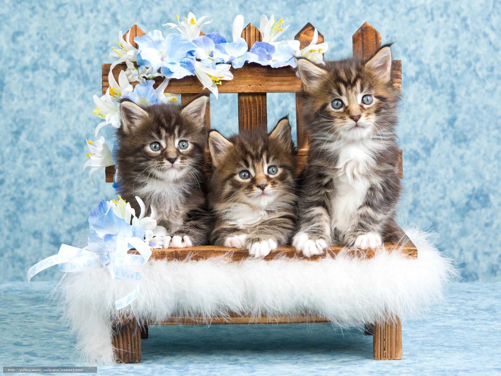 scaricare gli sfondi Gattini,  animali,  visualizzare Sfondi gratis per la risoluzione del desktop 6344x4758 — immagine №649943
