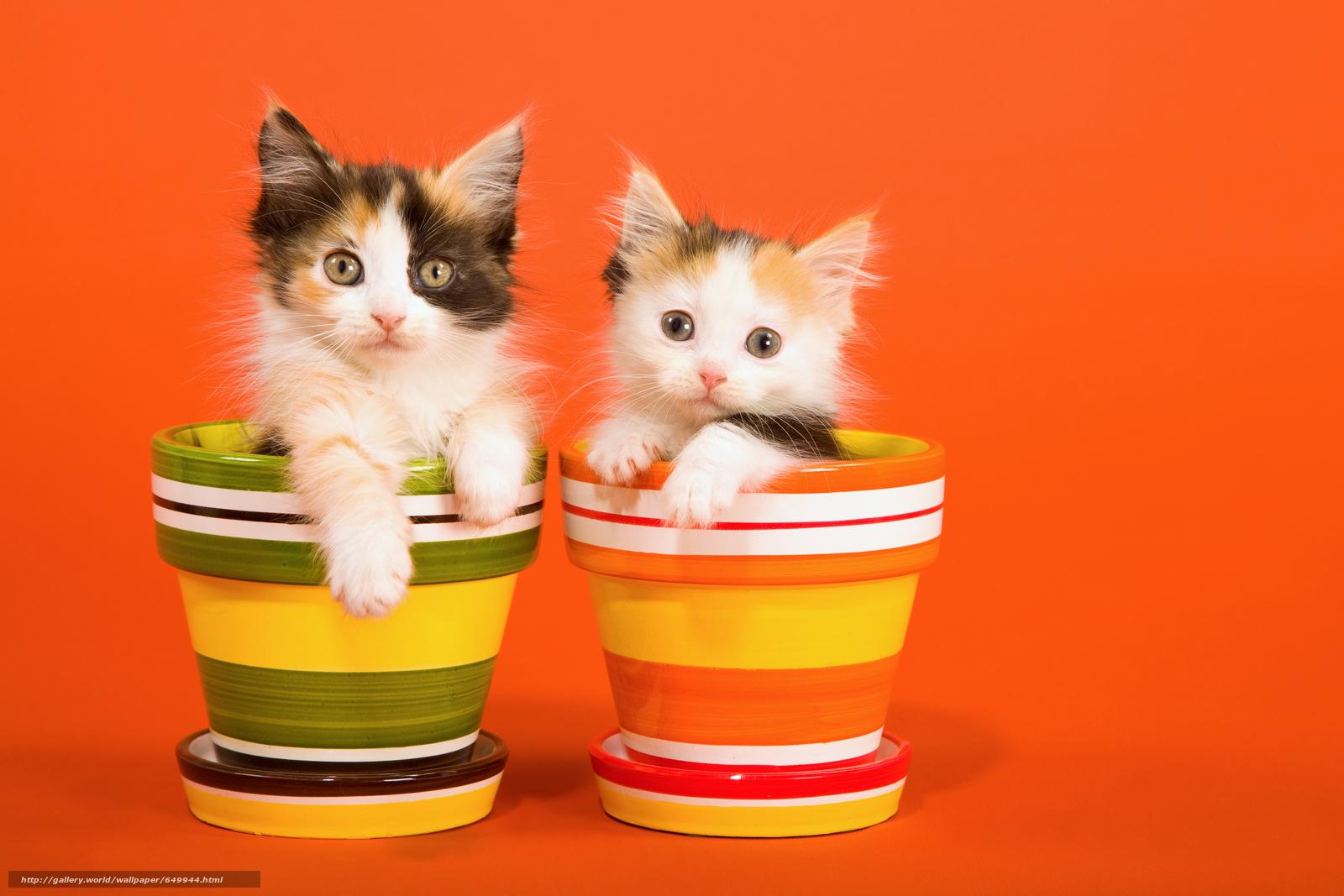 Скачать обои котята,  животные,  взгляд бесплатно для рабочего стола в разрешении 9000x6000 — картинка №649944