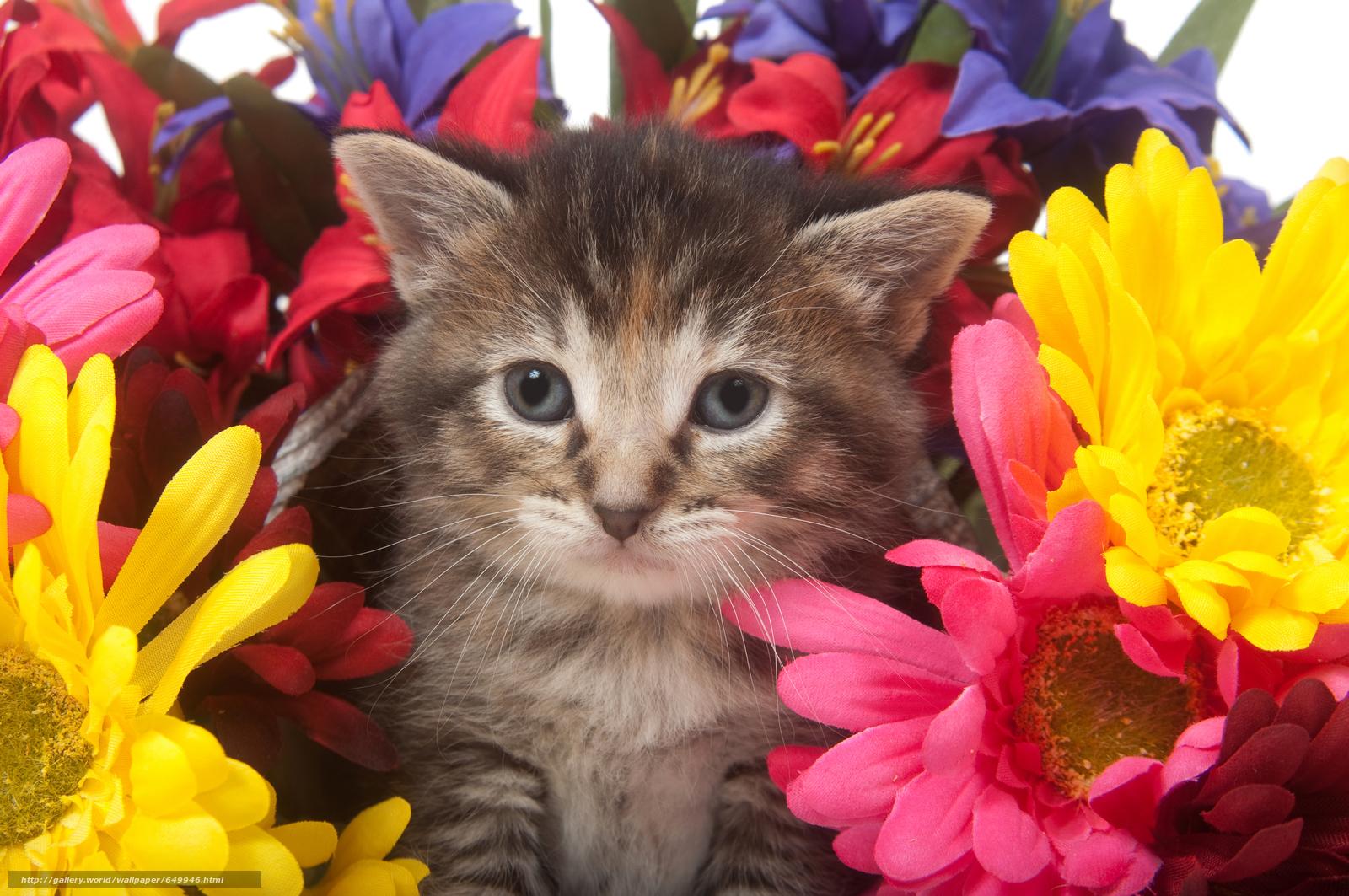 Download wallpaper kitten,  animals,  view free desktop wallpaper in the resolution 8576x5696 — picture №649946