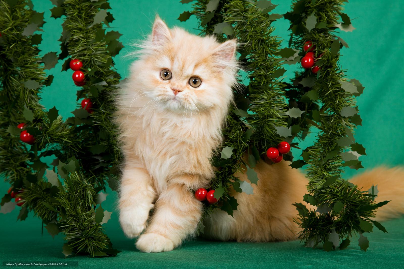 scaricare gli sfondi gattino,  animali,  visualizzare Sfondi gratis per la risoluzione del desktop 5616x3744 — immagine №649947