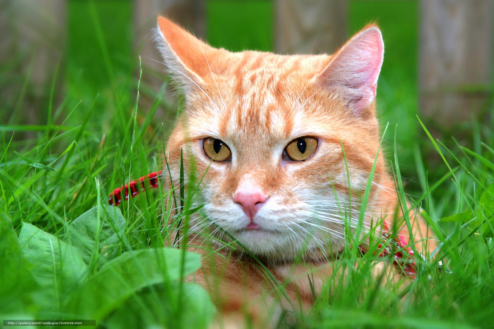 scaricare gli sfondi COTE,  gatto,  visualizzare Sfondi gratis per la risoluzione del desktop 6814x4542 — immagine №649948