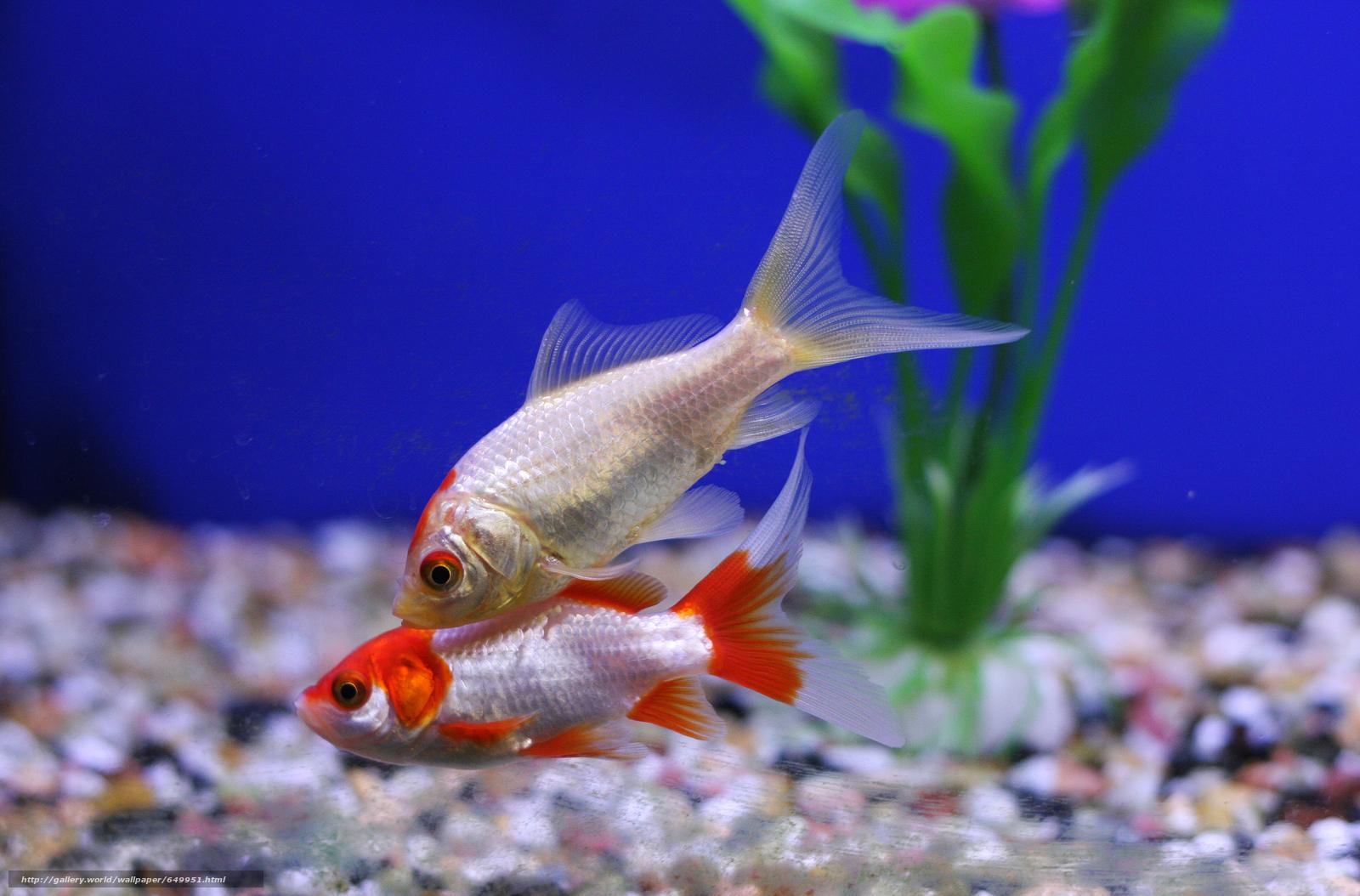 壁紙をダウンロード 水族館,  魚,  植物 デスクトップの解像度のための無料壁紙 7524x4956 — 絵 №649951
