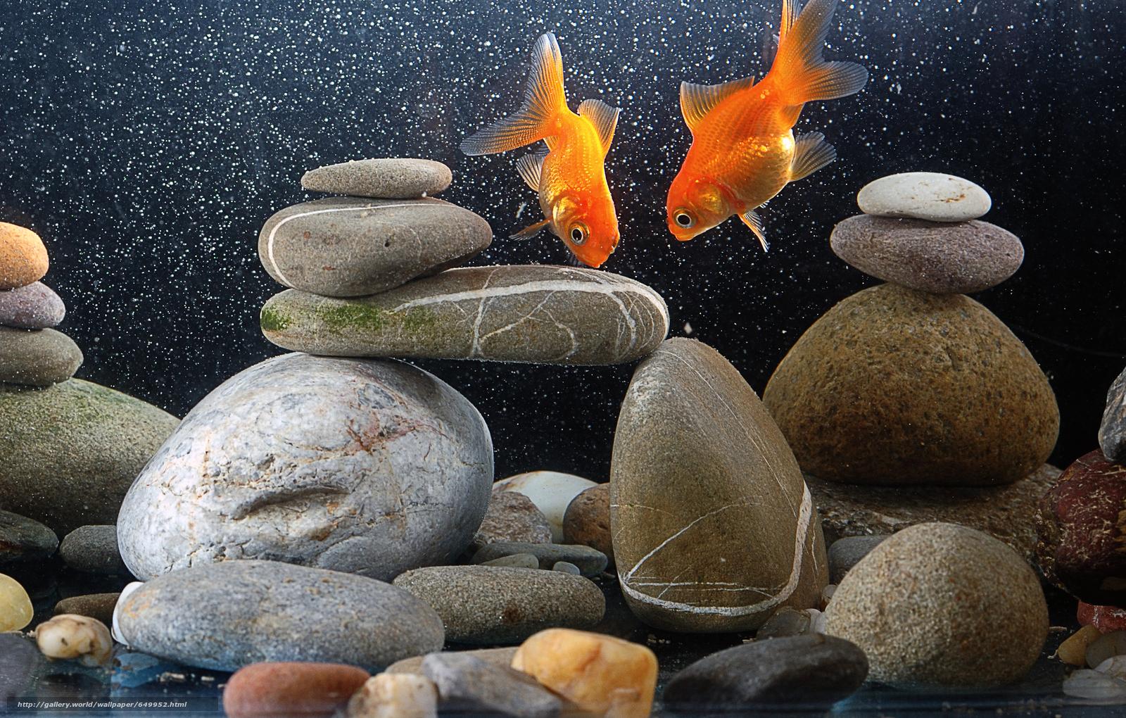 scaricare gli sfondi acquario,  pesce,  pietre Sfondi gratis per la risoluzione del desktop 5882x3750 — immagine №649952