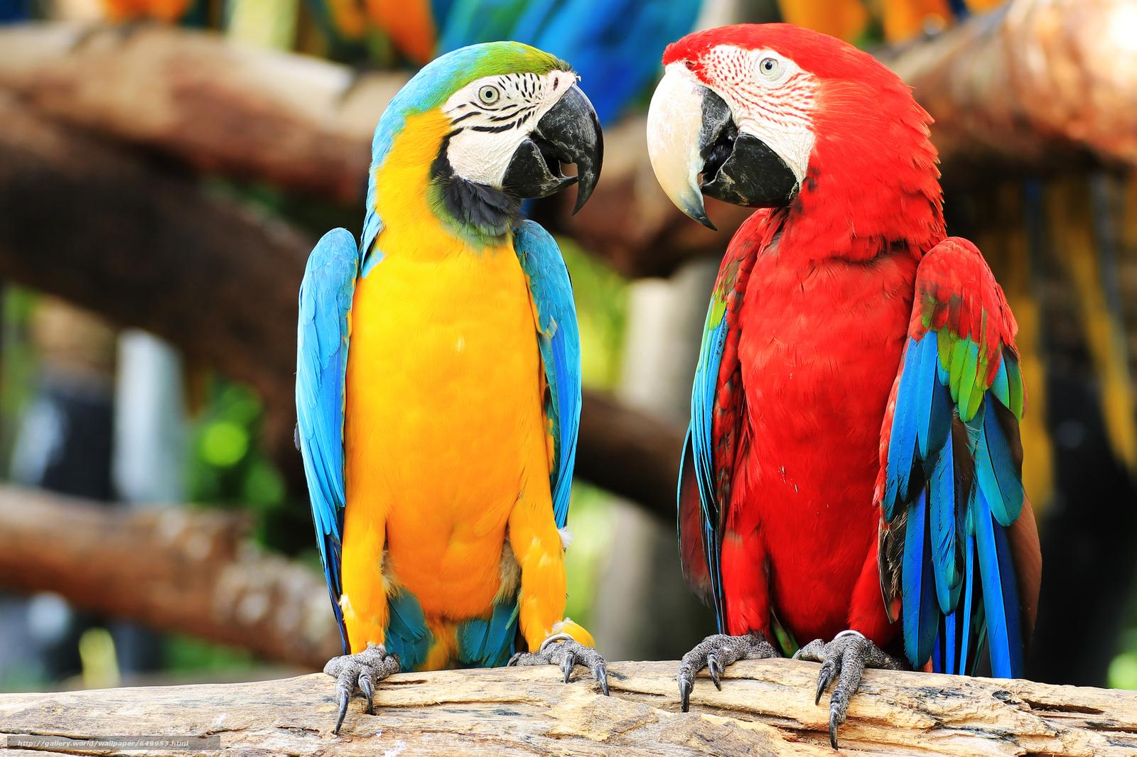 Descargar gratis Azul y amarillo Guacamayos,  loro,  pájaro Fondos de escritorio en la resolucin 6328x4218 — imagen №649953