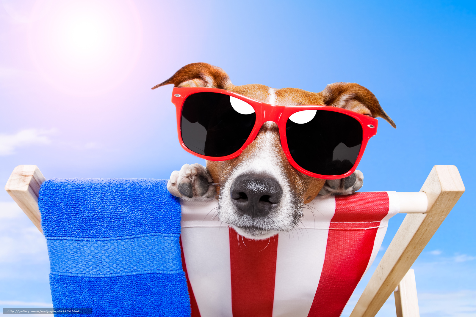 Скачать обои собака,  очки,  взгляд,  животное бесплатно для рабочего стола в разрешении 8578x5718 — картинка №649954