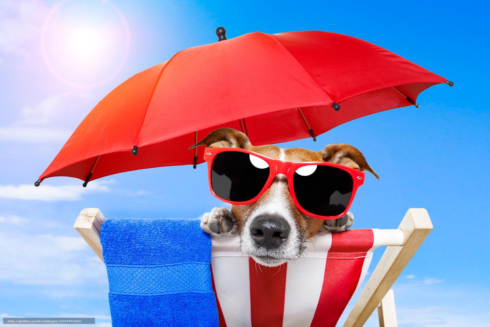 Скачать обои собака,  очки,  взгляд,  животное бесплатно для рабочего стола в разрешении 5658x3772 — картинка №649955
