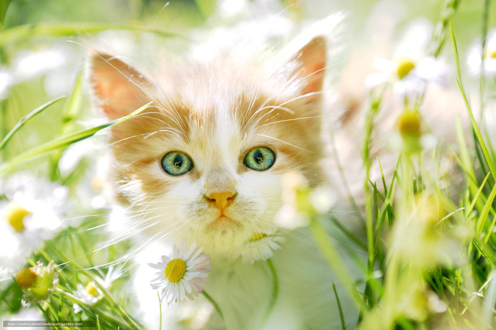 scaricare gli sfondi gattino,  museruola,  visualizzare,  Fiori Sfondi gratis per la risoluzione del desktop 6000x4000 — immagine №649962