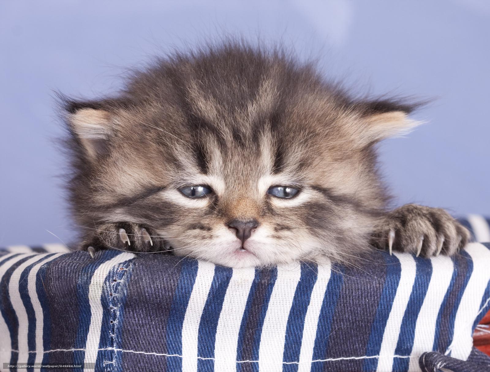 scaricare gli sfondi gattino,  bambino,  museruola Sfondi gratis per la risoluzione del desktop 6606x5022 — immagine №649966