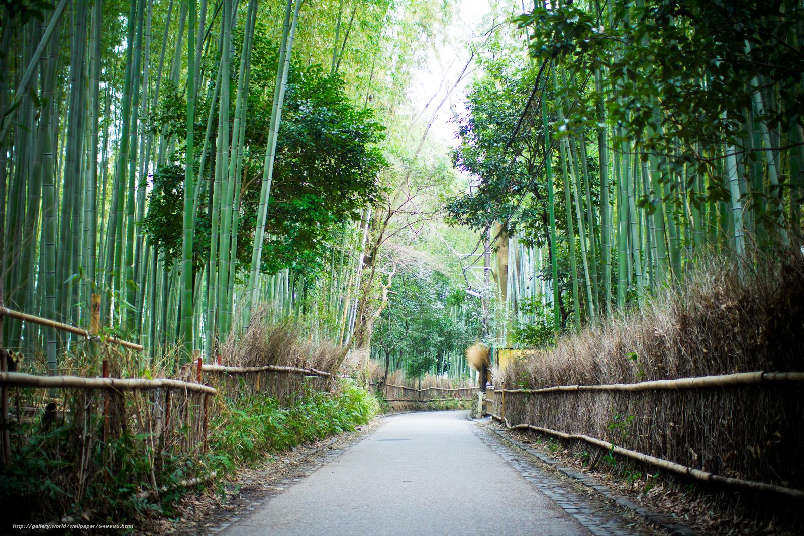 Скачать обои Арасияма,  Бамбуковый лес,  Киото,  Япония бесплатно для рабочего стола в разрешении 2048x1365 — картинка №649986
