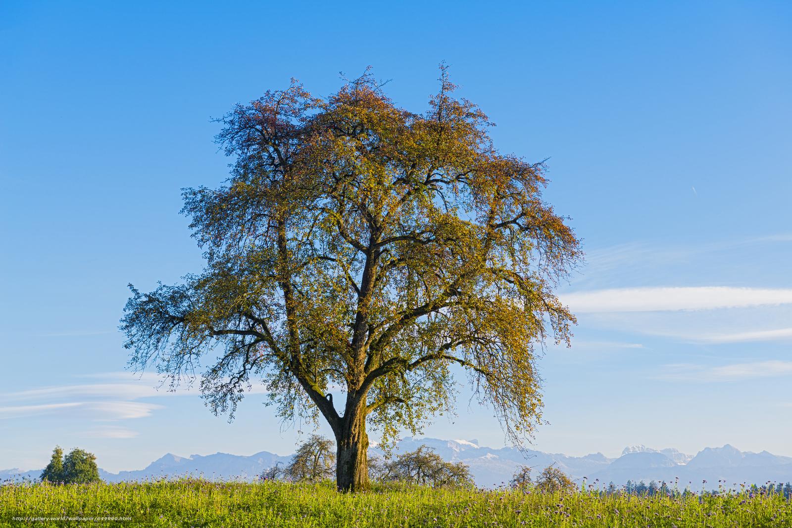 Скачать обои поле,  деревья,  пейзаж бесплатно для рабочего стола в разрешении 7360x4912 — картинка №649990
