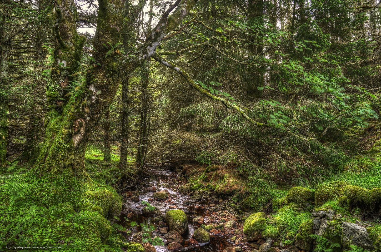 Baixar Wallpaper floresta,  árvores,  rio,  natureza Papis de parede grtis na resoluo 2048x1355 — quadro №650015