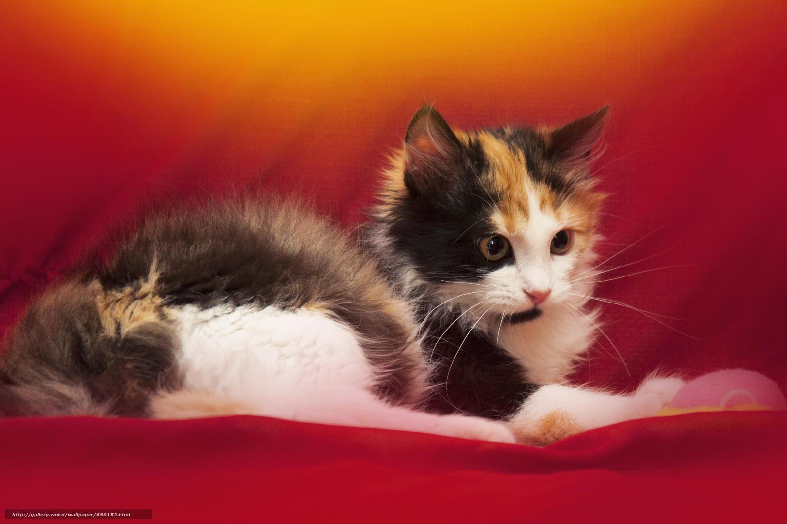 scaricare gli sfondi COTE,  gatto,  gatto,  gattino Sfondi gratis per la risoluzione del desktop 3622x2415 — immagine №650152