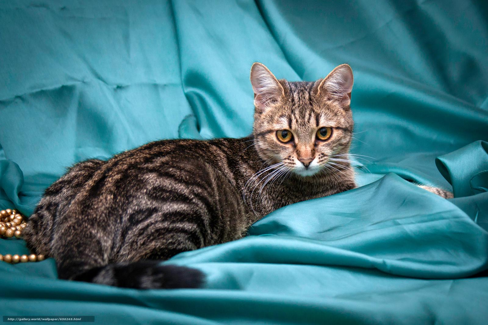 scaricare gli sfondi COTE,  gatto,  gatto,  sfondo Sfondi gratis per la risoluzione del desktop 3569x2380 — immagine №650265