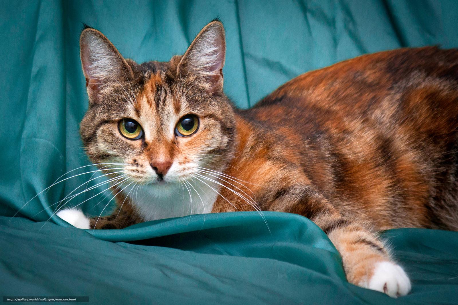 scaricare gli sfondi COTE,  gatto,  gatto,  sfondo Sfondi gratis per la risoluzione del desktop 2742x1828 — immagine №650354