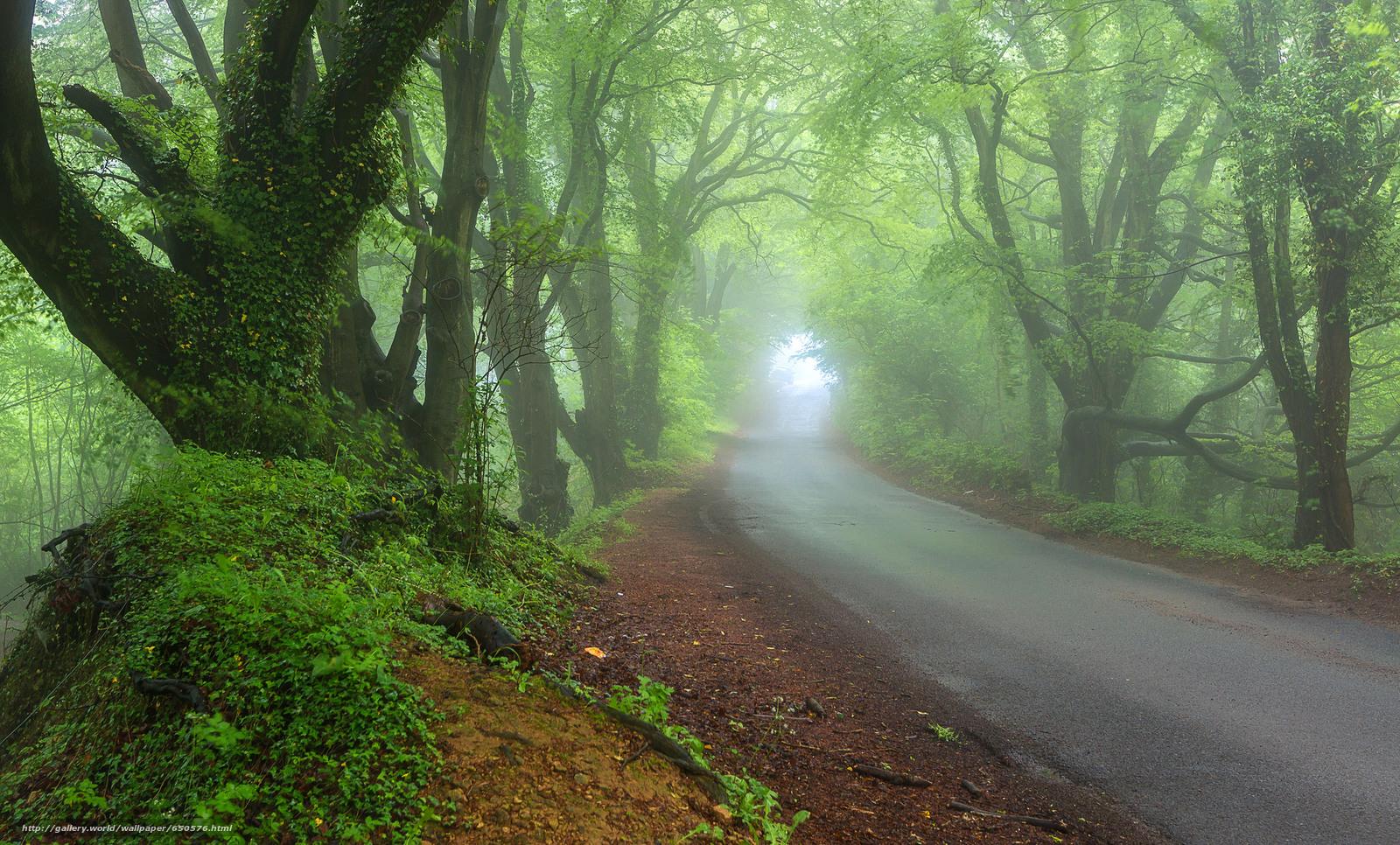 scaricare gli sfondi stradale,  alberi,  nebbia,  paesaggio Sfondi gratis per la risoluzione del desktop 2048x1237 — immagine №650576