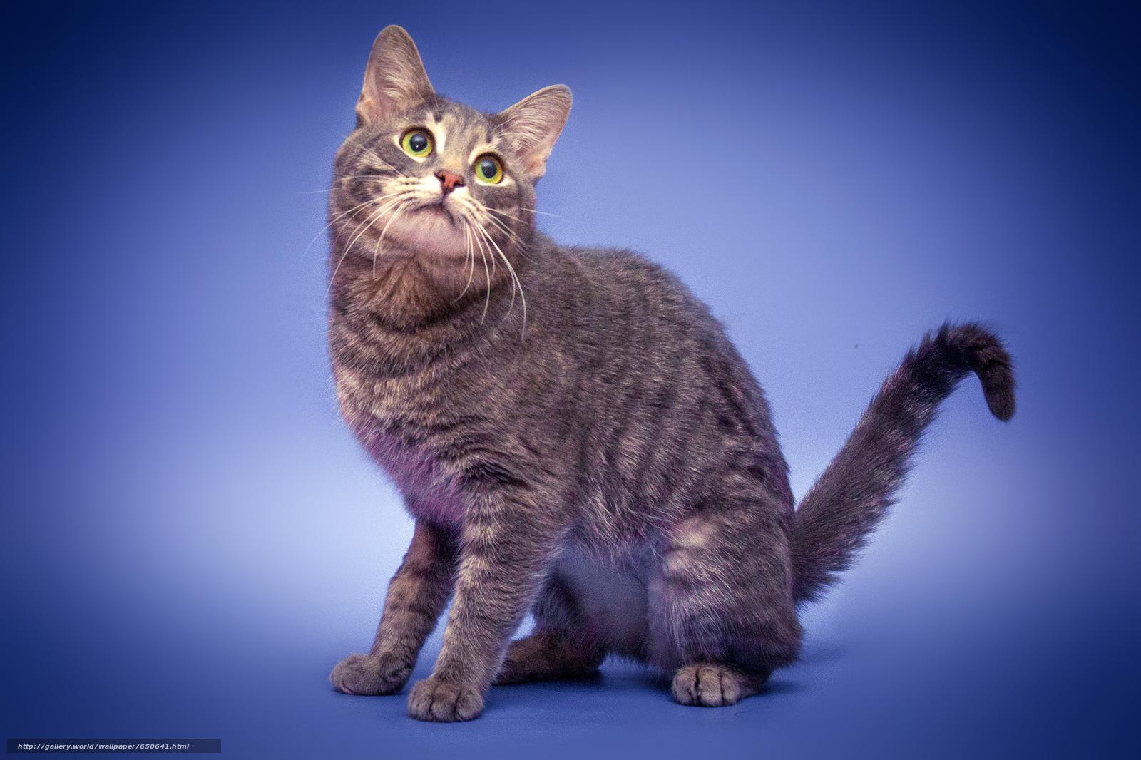 scaricare gli sfondi COTE,  gatto,  gatto,  gattino Sfondi gratis per la risoluzione del desktop 2500x1666 — immagine №650641